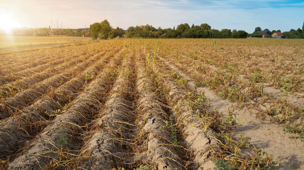Early detection of crop stress in Belgium