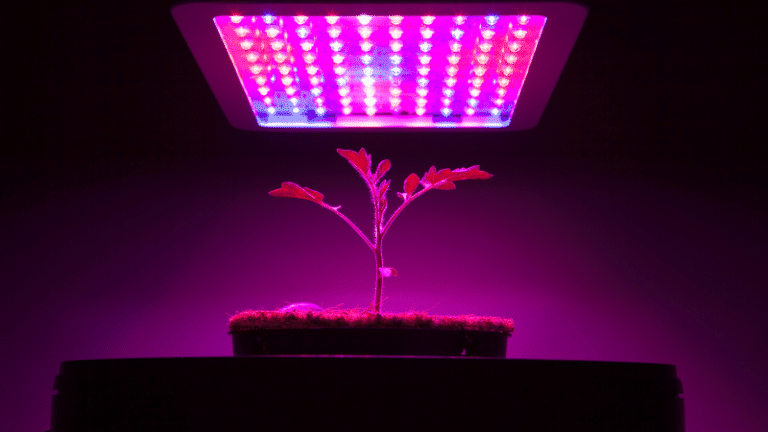 Sustainable farming can be achieved with LED light shows