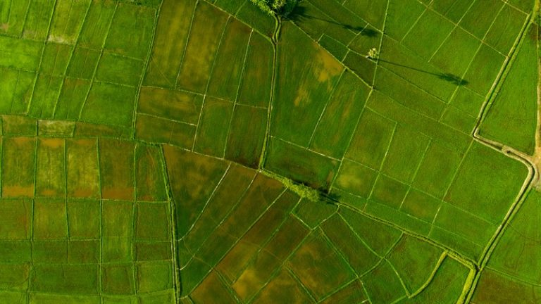 Satellite mapping makes agriculture more sustainable